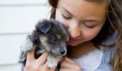 """研究发现""""狗狗爱你""""的原因与基因有关"""