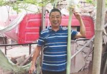 泉州一市民种出1.07米长面条瓠子