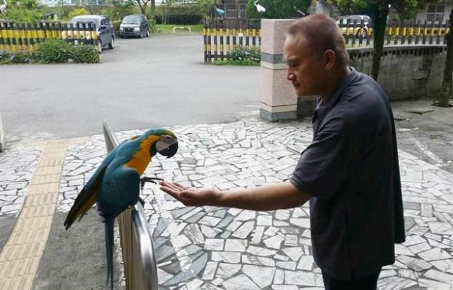 聪明的琉璃鹦鹉,逃到派出所向警察求救。(图片取自台媒)