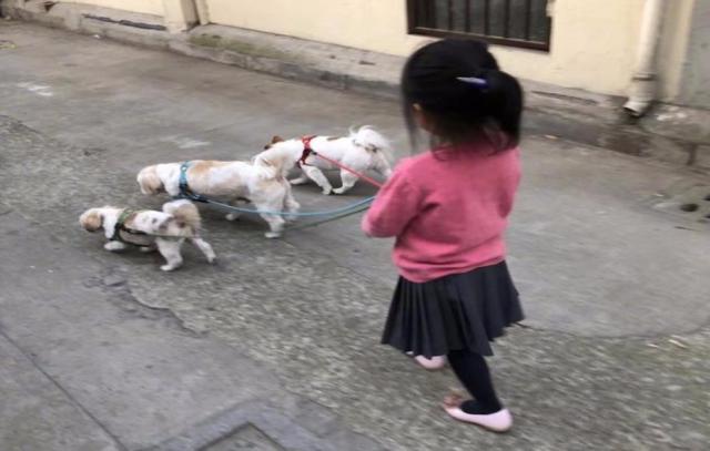 孙俪女儿小花手牵三只狗狗