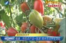 w88优德易博网评级:特色农产品+旅游 观光农业异军突起