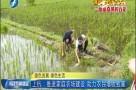 上杭:推进家庭农场建设 助力农民增收致富