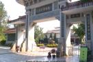 世界茶王的中国梦
