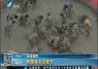 韩国举办泥浆节