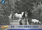 八旬老太带狼狗在公园放羊