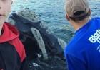 鲸鱼求助渔民拿出口中塑料袋