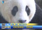 """熊猫""""巴斯""""将迎35岁生日"""