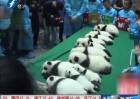 6对新生熊猫双胞胎集体亮相