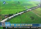 邵武丰收季 彩色水稻成美景