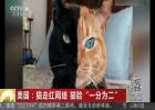 """猫走红网络 猫脸""""一分为二"""""""