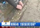 福清工业区废水污染海水 养殖户绝收