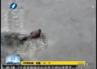 男子冰湖遛狗 人与狗一同落水