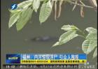 福州:内河惊现浮尸 引众人围观