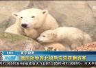 德国动物园北极熊宝宝萌翻游客