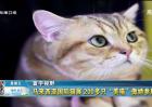 马来西亚国际猫展热闹举行
