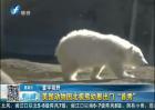 """美国动物园北极熊幼崽""""首秀"""""""