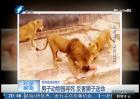 男子动物园寻死 反害狮子送命