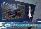 3D打印助乌龟重获新生