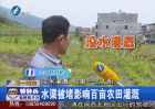福州闽侯:水渠被堵数百亩农田缺水