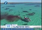 70头虎鲨吞食死鲸 场面惊人