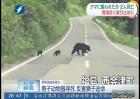 日本:熊出没!咬死2男