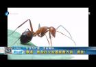漳浦:致命红火蚁蔓延数万亩?谣言!