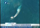 无人机航拍布氏鲸捕食震撼画面