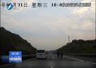 莆田:马匹闯进高速 任性与车竞速