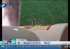 """江苏南京:""""神花""""原来是虫卵!"""