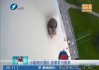 小猫高空遇险 救援者巧施救