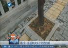 福州:盲道中央多个树池挡路
