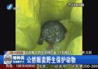 追踪三明大田贩卖野生动物乱象 已落网6人