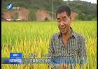 黄秀泉:农技铁人 生活强者