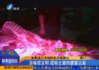 厦门:斩断流入市场的私宰猪源头