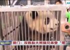 厦门:双胞胎大熊猫兄弟登