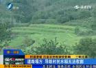 三明尤溪:村道滑坡 百亩农田收割受影响
