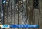 """泉州:""""9岁女孩遛老虎""""视频网络爆红"""