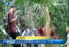 印尼农民种植园中意外开出