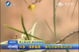 """共享""""清新福建"""" 候鸟为绿水青山代言"""