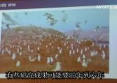 福建省观鸟协会会长杨金接受东南广播专访