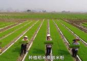 柳州螺蛳粉的产业化