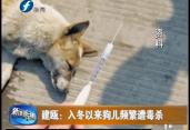 建瓯:入冬以来狗儿频繁遭毒杀