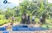 莆田:水稻种植有保险  农民种田更踏实
