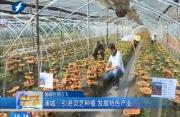 浦城:引进灵芝种植 发展特色产业