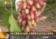 200元葡萄400元运费 台湾精致农业在淮安大卖