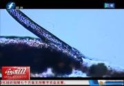 漳州:一男子眼睛总是发痒 竟是螨虫作怪