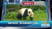 20190311 高雄市观光局:重庆拟赠高雄两只大熊猫