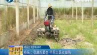 将乐:引进新菌类 年前出菇收益高