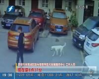 导盲犬走失 众人帮它回家
