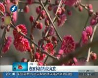 上海:春寒料峭梅花竞放